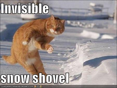 funny-pictures-cat-with-invisible-snow-shovel1.jpg